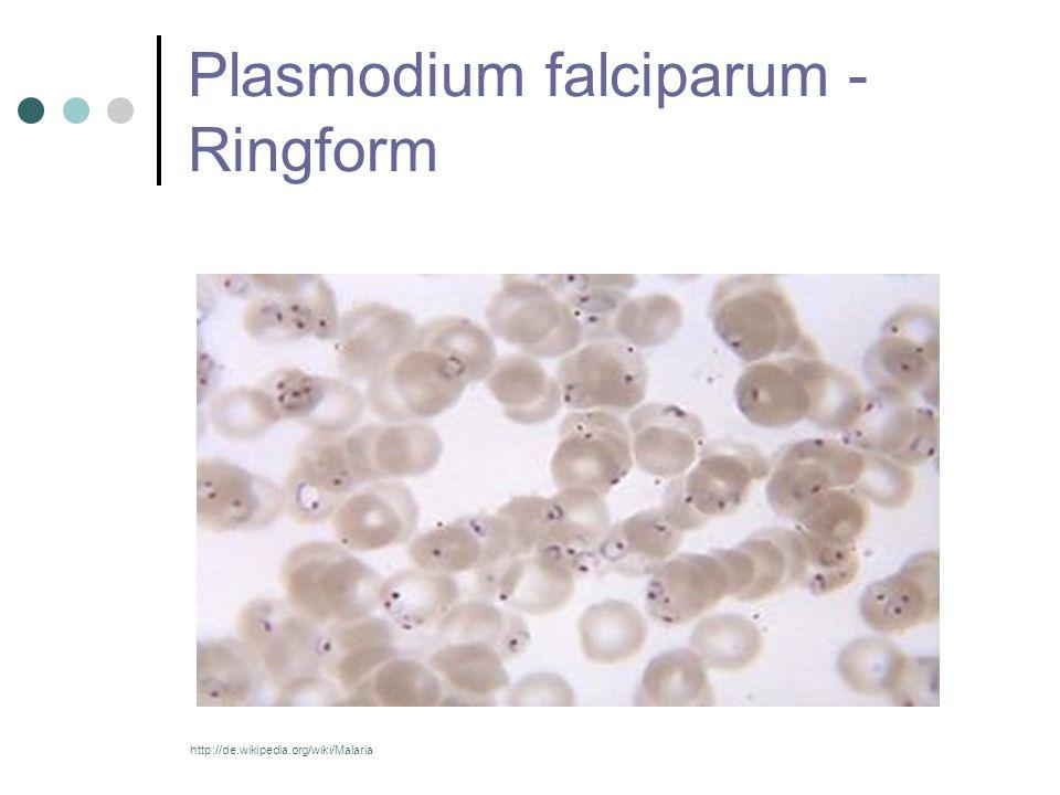 Plasmodium falciparum - Ringform http://de.wikipedia.org/wiki/Malaria