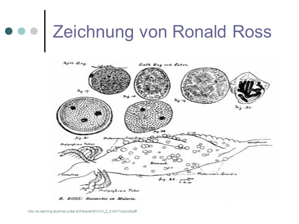 Zeichnung von Ronald Ross http://e-learning.studmed.unibe.ch/Malaria/html/m1_2_3.htm?||soundisoff