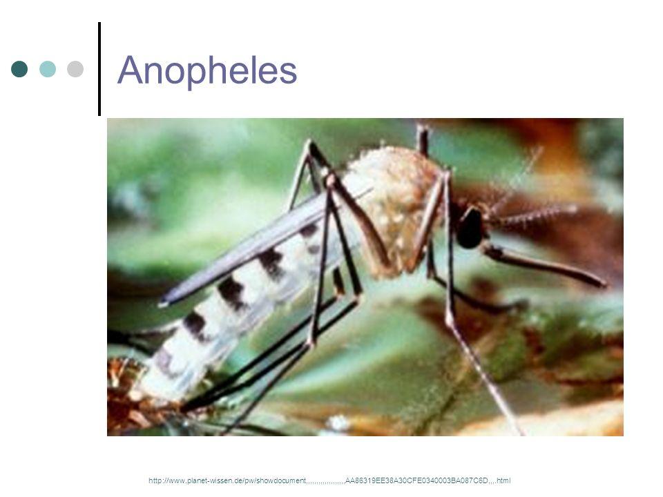 Diagnostik Mikroskopische Untersuchung eines Blutausstrichs Immunologische und molekularbiologische Untersuchung durch Malaria-Schnelltests – Nachweis von Antigene PCR - Polymerasekettenreaktion