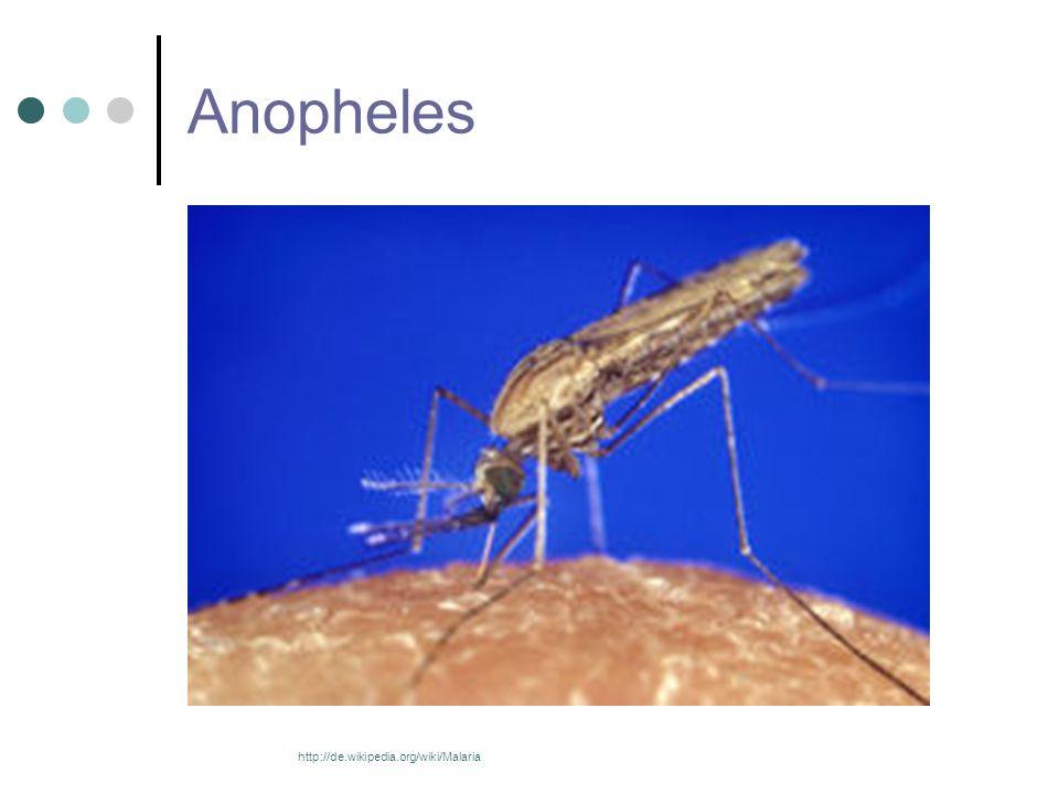 Prophylaxe Insektenschutz Moskitonetz Stand-By-Medikation Vor der Abreise ausführliche Informationen sammeln