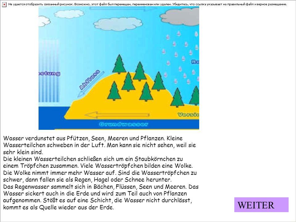 Wasser verdunstet aus Pfützen, Seen, Meeren und Pflanzen. Kleine Wasserteilchen schweben in der Luft. Man kann sie nicht sehen, weil sie sehr klein si