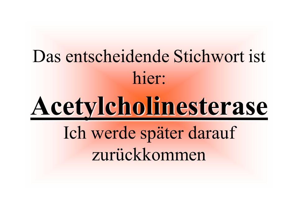 Acetylcholinesterase Das entscheidende Stichwort ist hier: Acetylcholinesterase Ich werde später darauf zurückkommen