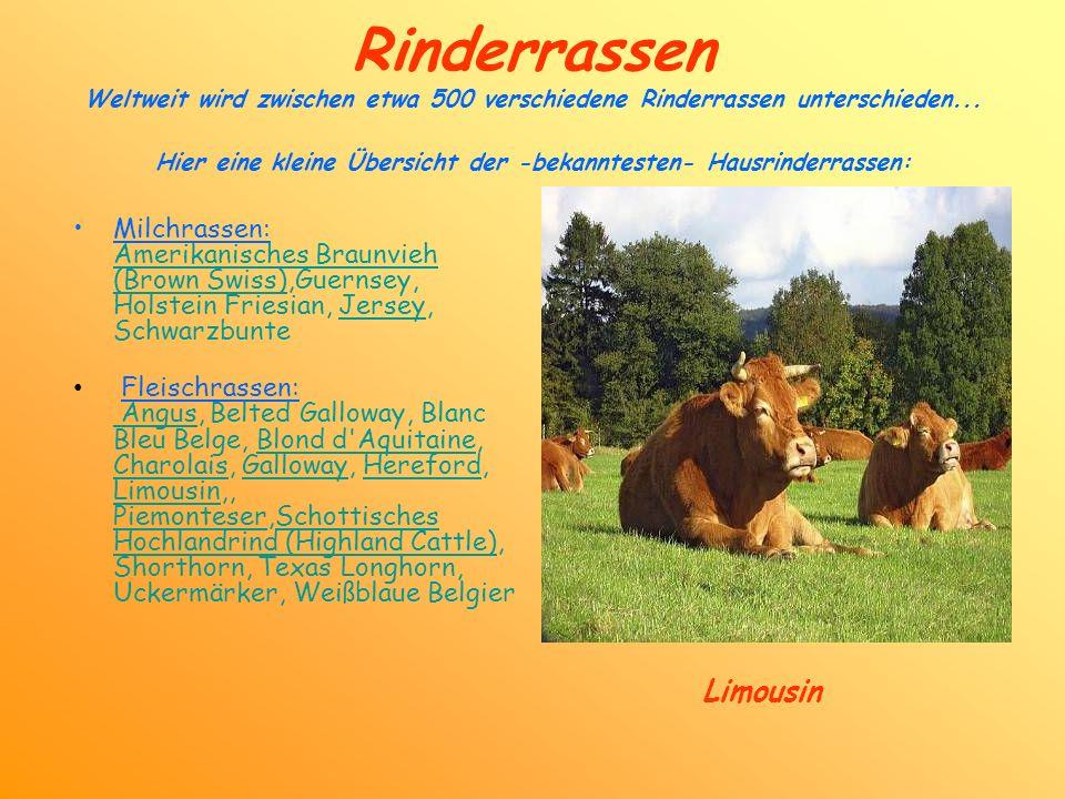 Rinderrassen Weltweit wird zwischen etwa 500 verschiedene Rinderrassen unterschieden... Hier eine kleine Übersicht der -bekanntesten- Hausrinderrassen