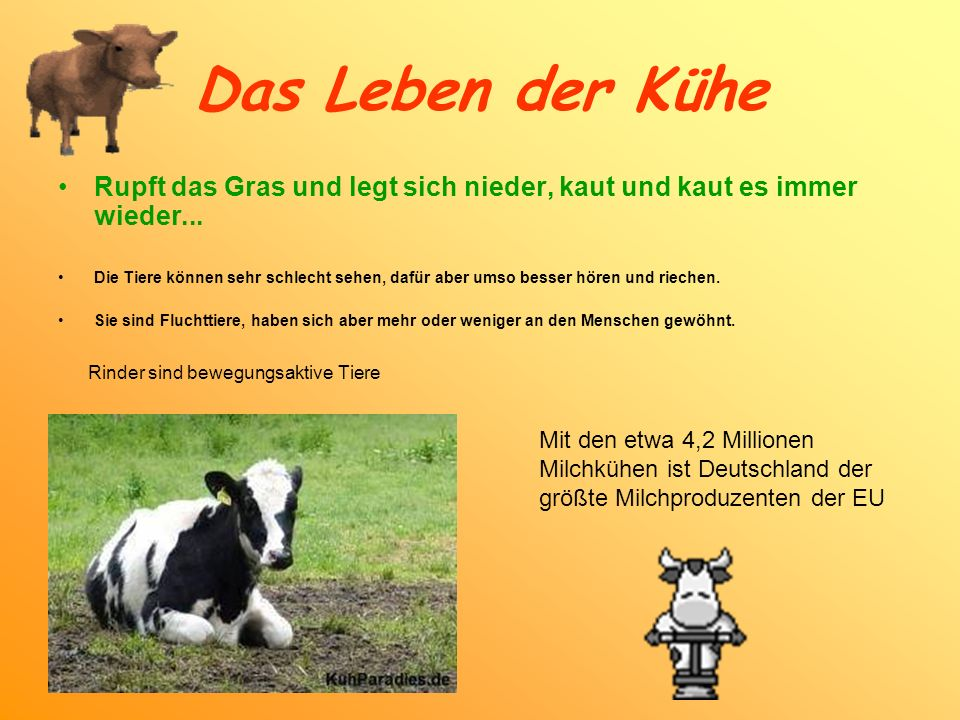 Das Leben der Kühe Rupft das Gras und legt sich nieder, kaut und kaut es immer wieder... Die Tiere können sehr schlecht sehen, dafür aber umso besser