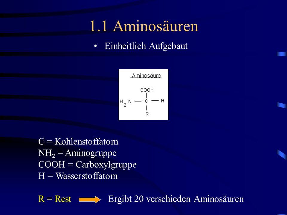 1.1 Aminosäuren Einheitlich Aufgebaut C = Kohlenstoffatom NH 2 = Aminogruppe COOH = Carboxylgruppe H = Wasserstoffatom R = Rest Ergibt 20 verschieden