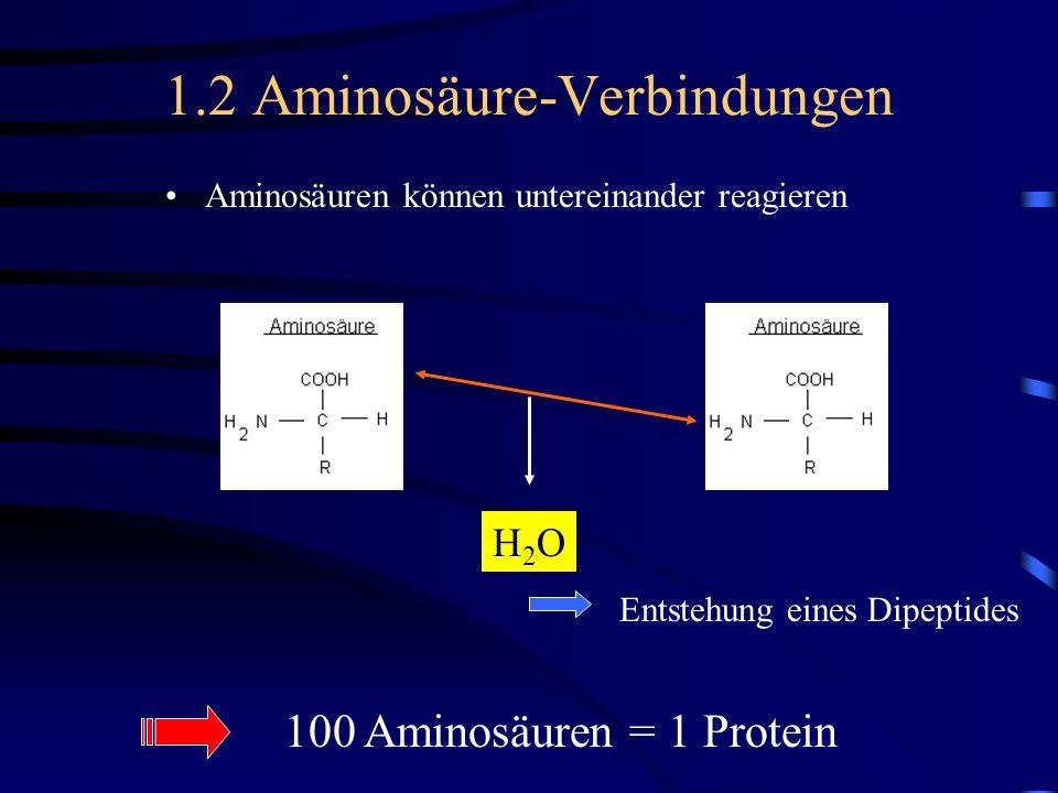 1.2 Aminosäure-Verbindungen Aminosäuren können untereinander reagieren H2OH2O Entstehung eines Dipeptides 100 Aminosäuren = 1 Protein