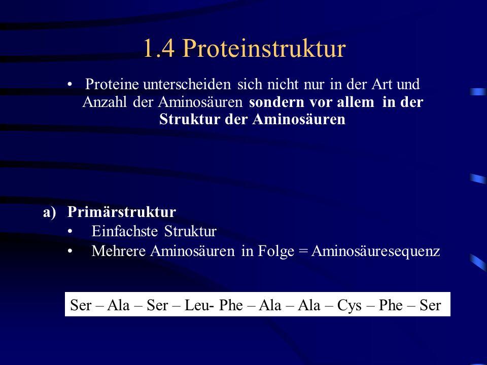 1.4 Proteinstruktur Proteine unterscheiden sich nicht nur in der Art und Anzahl der Aminosäuren sondern vor allem in der Struktur der Aminosäuren a)Pr
