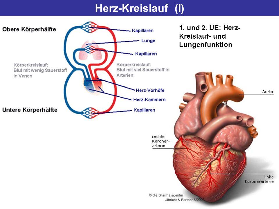 Herz-Kreislauf (I) 1. und 2. UE: Herz- Kreislauf- und Lungenfunktion