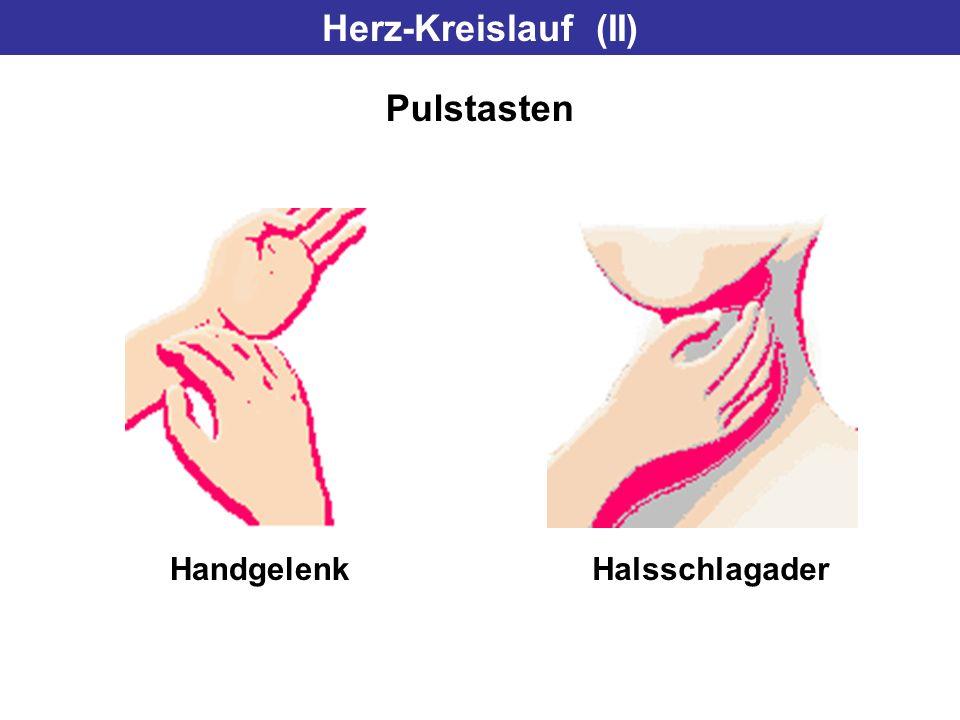 Herz-Kreislauf (II) Pulstasten HandgelenkHalsschlagader