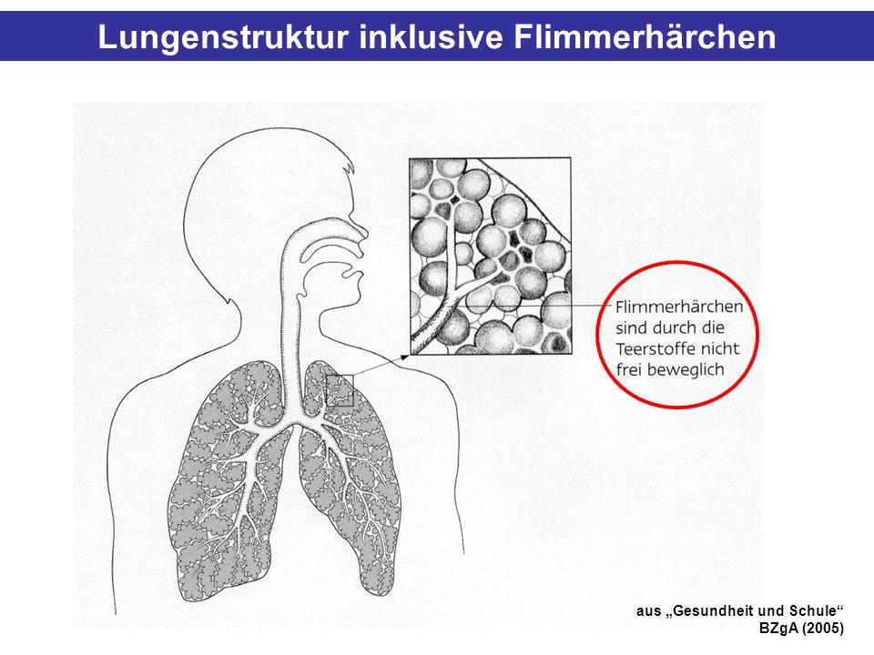 Lungenstruktur inklusive Flimmerhärchen aus Gesundheit und Schule BZgA (2005)