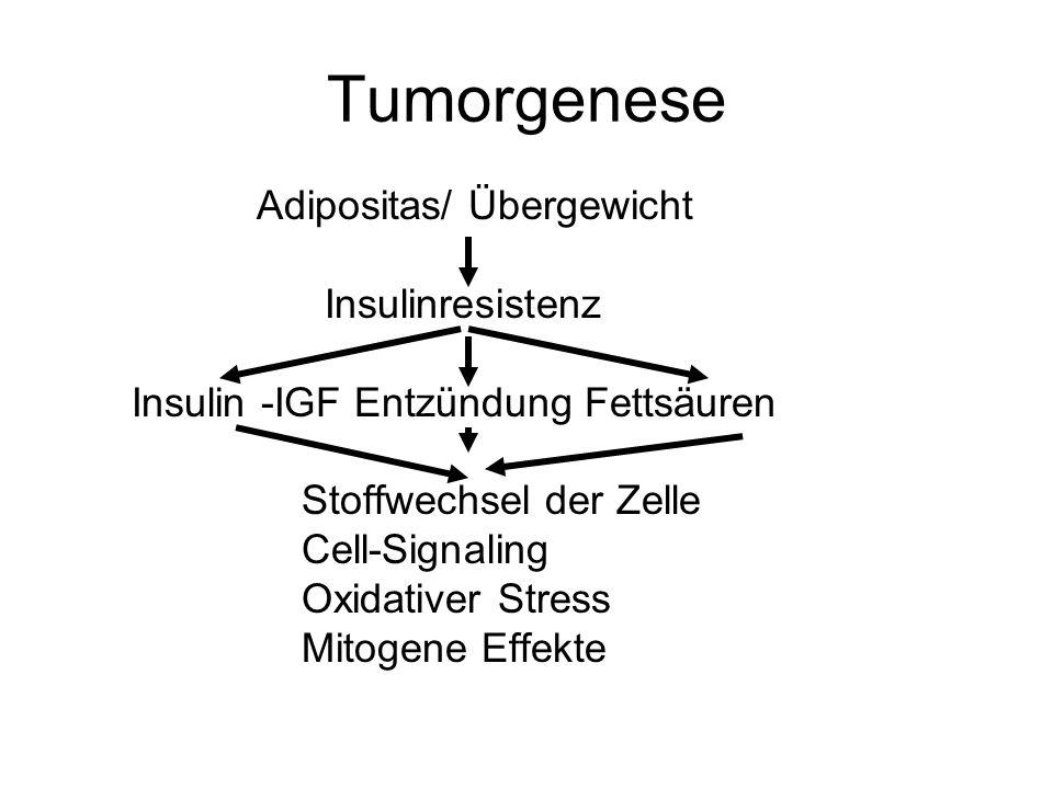 Tumorgenese Adipositas/ Übergewicht Insulinresistenz Insulin -IGF Entzündung Fettsäuren Stoffwechsel der Zelle Cell-Signaling Oxidativer Stress Mitoge