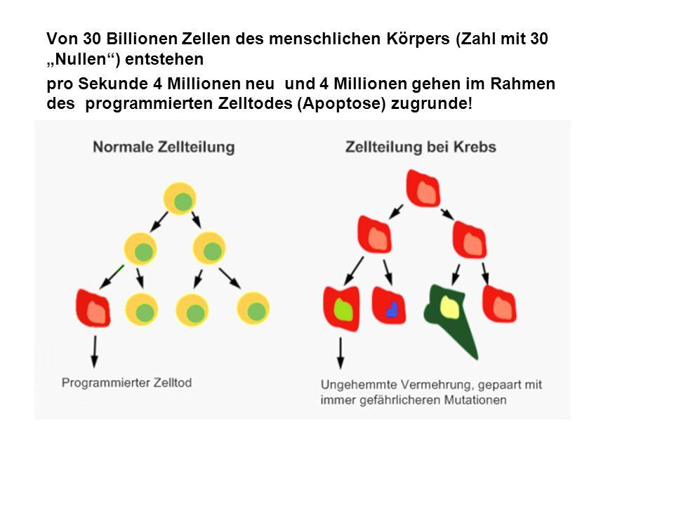 Von 30 Billionen Zellen des menschlichen Körpers (Zahl mit 30 Nullen) entstehen pro Sekunde 4 Millionen neu und 4 Millionen gehen im Rahmen des progra
