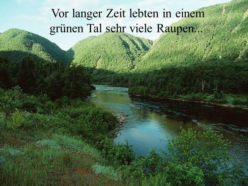 Vor langer Zeit lebten in einem grünen Tal sehr viele Raupen...