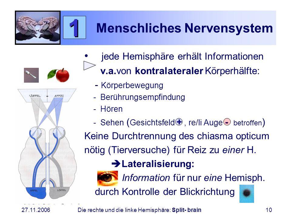 27.11.2006 Die rechte und die linke Hemisphäre: Split- brain10 Menschliches Nervensystem jede Hemisphäre erhält Informationen v.a.von kontralateraler