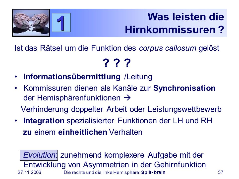 27.11.2006 Die rechte und die linke Hemisphäre: Split- brain37 Was leisten die Hirnkommissuren ? Ist das Rätsel um die Funktion des corpus callosum ge