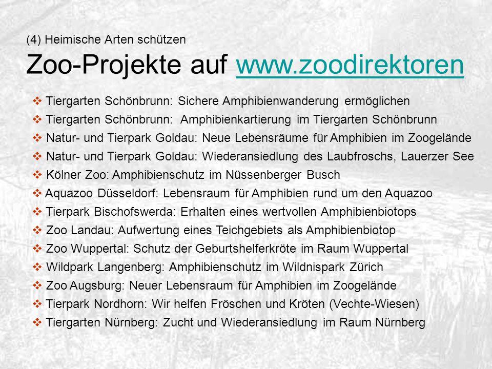 (4) Heimische Arten schützen Zoo-Projekte auf www.zoodirektorenwww.zoodirektoren Tiergarten Schönbrunn: Sichere Amphibienwanderung ermöglichen Tiergar