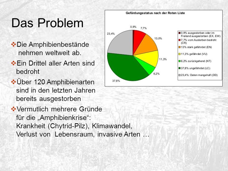 Das Problem Die Amphibienbestände nehmen weltweit ab. Ein Drittel aller Arten sind bedroht Über 120 Amphibienarten sind in den letzten Jahren bereits