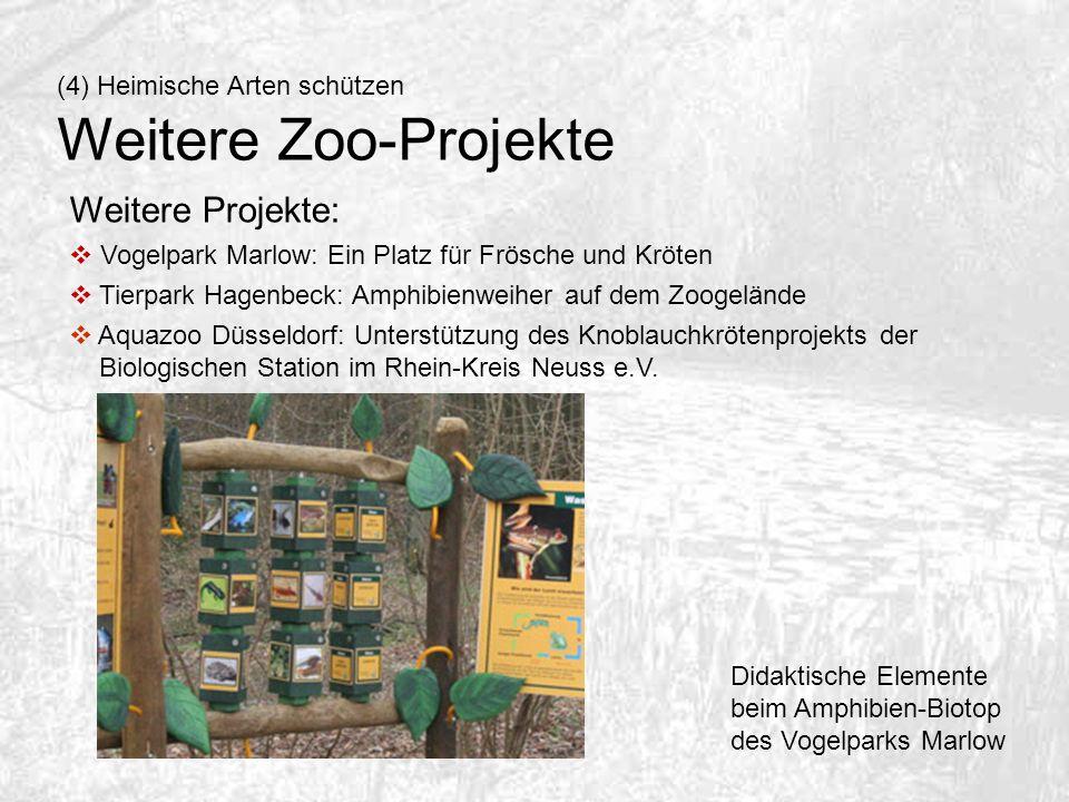 Weitere Projekte: Vogelpark Marlow: Ein Platz für Frösche und Kröten Tierpark Hagenbeck: Amphibienweiher auf dem Zoogelände Aquazoo Düsseldorf: Unters