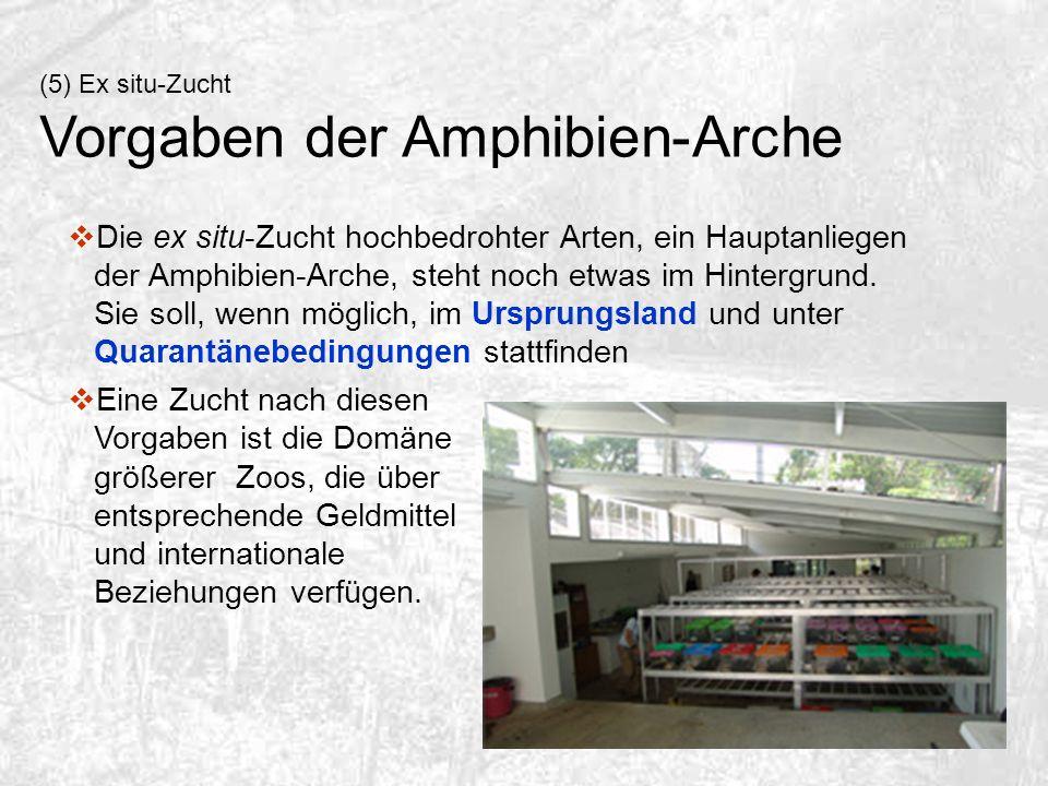 (5) Ex situ-Zucht Vorgaben der Amphibien-Arche Die ex situ-Zucht hochbedrohter Arten, ein Hauptanliegen der Amphibien-Arche, steht noch etwas im Hinte