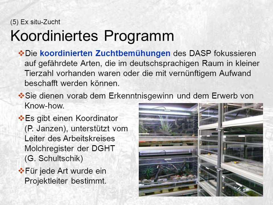 (5) Ex situ-Zucht Koordiniertes Programm Die koordinierten Zuchtbemühungen des DASP fokussieren auf gefährdete Arten, die im deutschsprachigen Raum in