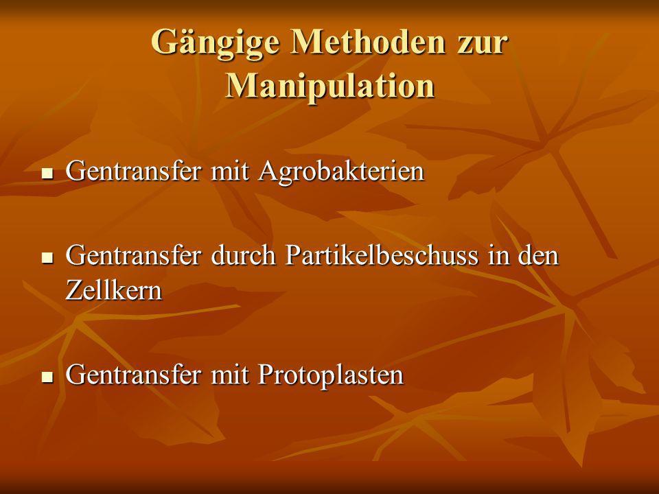 Gängige Methoden zur Manipulation Gentransfer mit Agrobakterien Gentransfer mit Agrobakterien Gentransfer durch Partikelbeschuss in den Zellkern Gentr