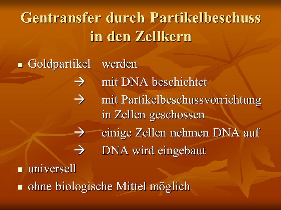 Gentransfer durch Partikelbeschuss in den Zellkern Goldpartikel werden Goldpartikel werden mit DNA beschichtet mit DNA beschichtet mit Partikelbeschus