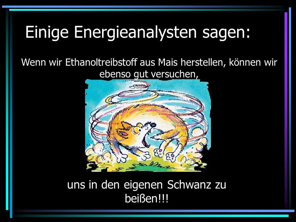 Einige Energieanalysten sagen: uns in den eigenen Schwanz zu beißen!!! Wenn wir Ethanoltreibstoff aus Mais herstellen, können wir ebenso gut versuchen