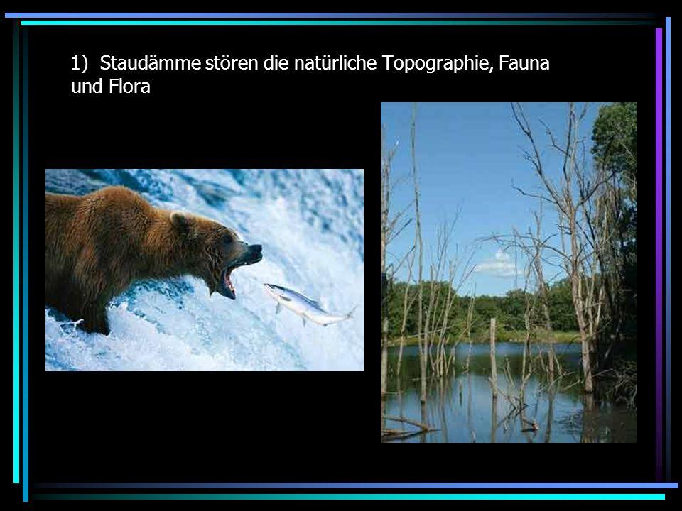 1) Staudämme stören die natürliche Topographie, Fauna und Flora