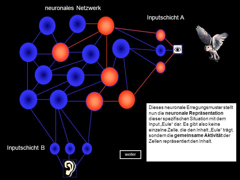 Inputschicht A neuronales Netzwerk Inputschicht B Die Abbildung zeigt ein stark systematisiertes, neuronales Netzwerk, anhand dessen einige zentrale P