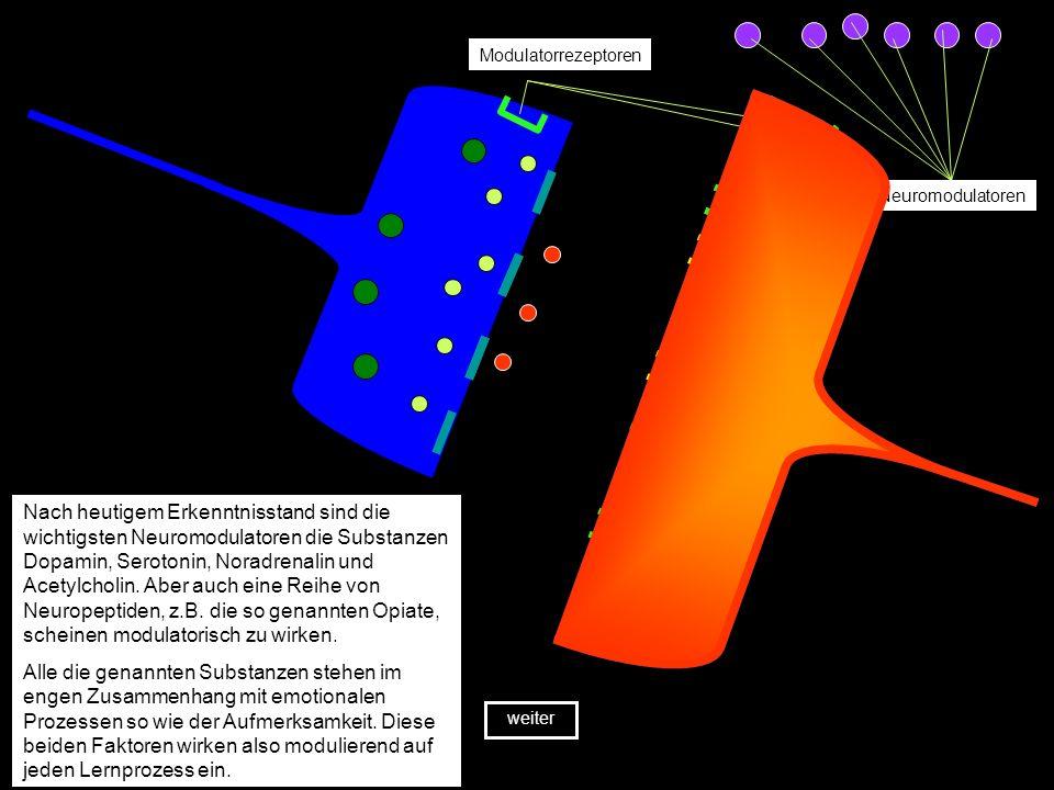 Allerdings ist die direkte Neurotransmission von einer Zelle zur nächsten nicht der einzige chemische Prozess, der die Signalübertragung beeinflusst.