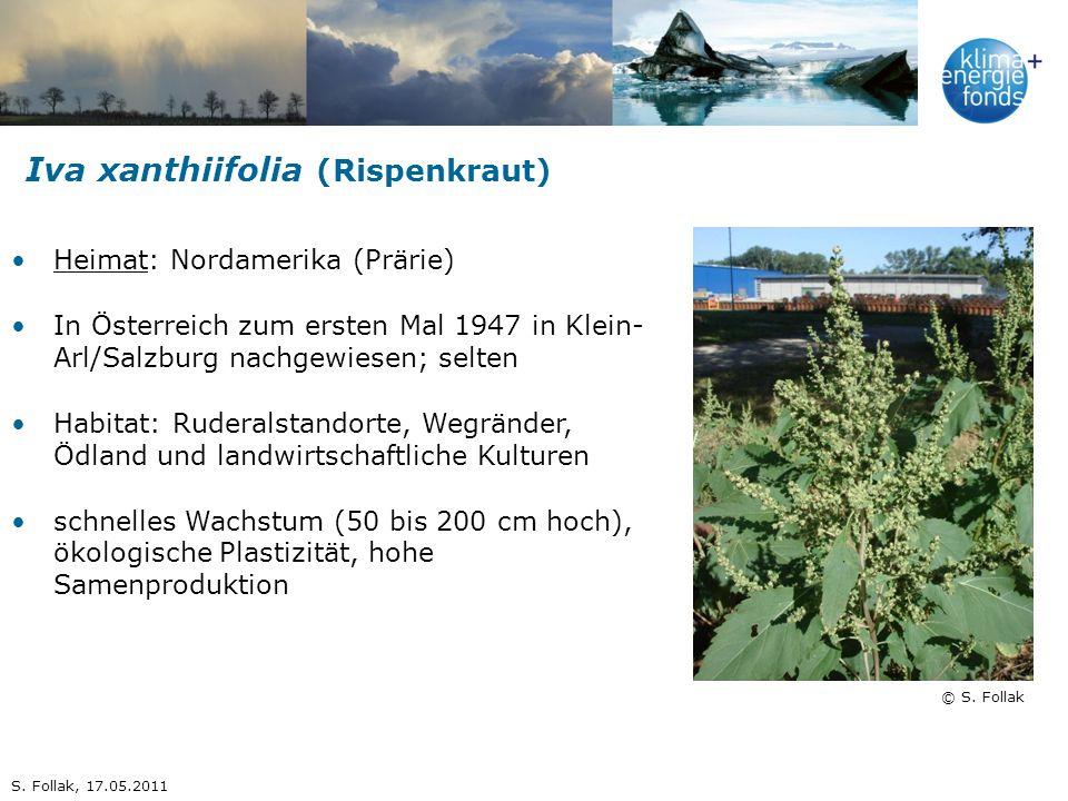 Iva xanthiifolia (Rispenkraut) © S. Follak Heimat: Nordamerika (Prärie) In Österreich zum ersten Mal 1947 in Klein- Arl/Salzburg nachgewiesen; selten