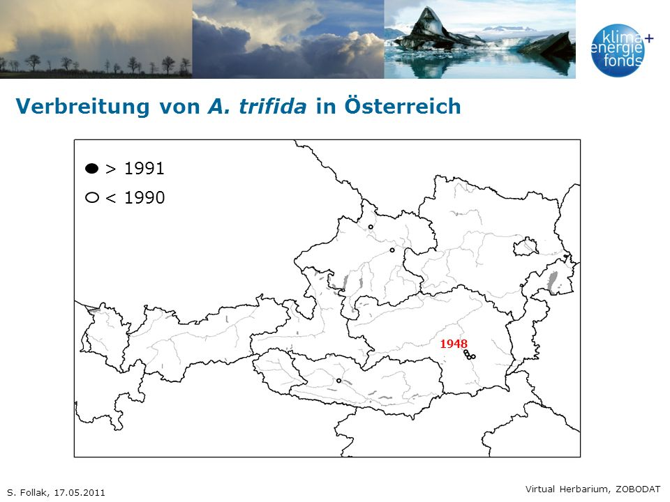Verbreitung von A. trifida in Österreich 1948 > 1991 < 1990 Virtual Herbarium, ZOBODAT S. Follak, 17.05.2011