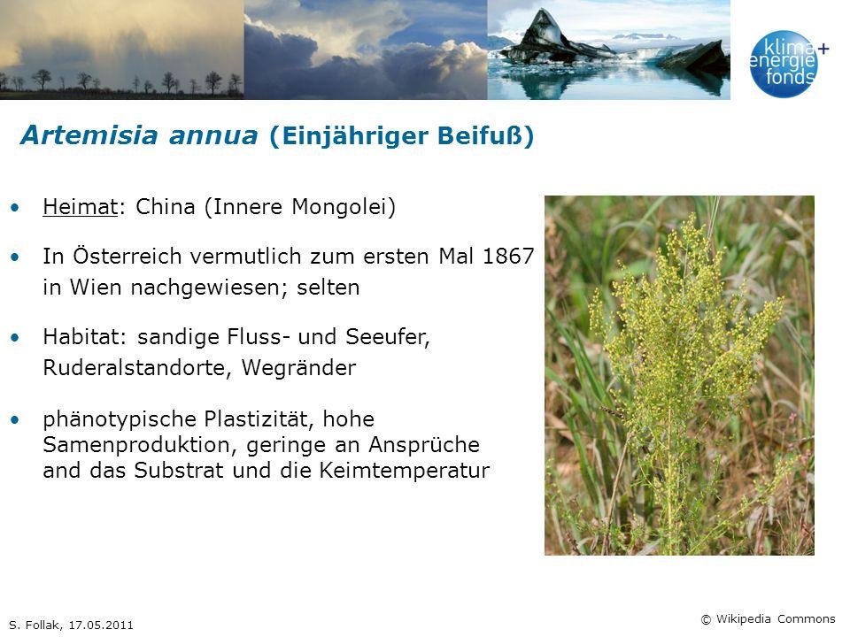 Artemisia annua (Einjähriger Beifuß) Heimat: China (Innere Mongolei) In Österreich vermutlich zum ersten Mal 1867 in Wien nachgewiesen; selten Habitat