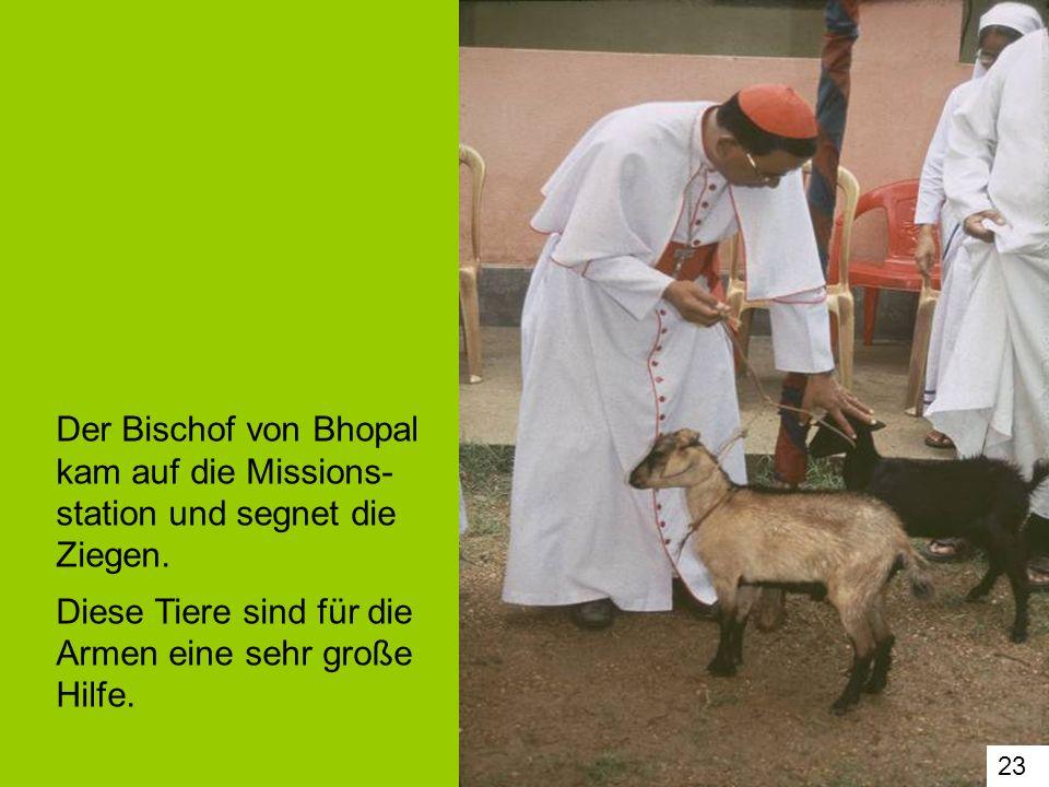 23 Der Bischof von Bhopal kam auf die Missions- station und segnet die Ziegen. Diese Tiere sind für die Armen eine sehr große Hilfe.