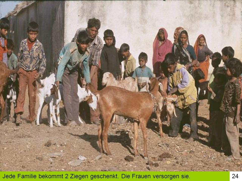 24Jede Familie bekommt 2 Ziegen geschenkt. Die Frauen versorgen sie.