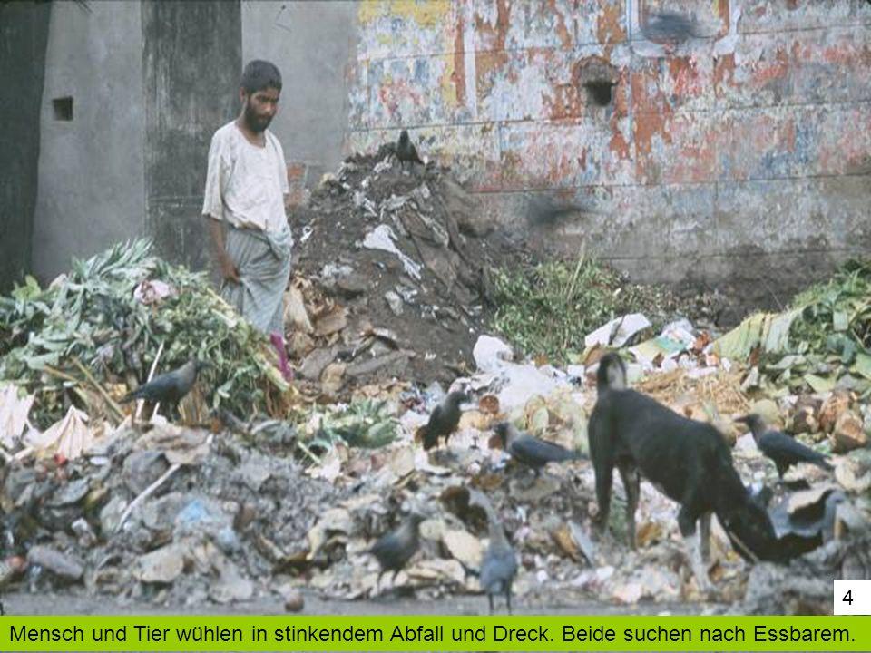 4 Mensch und Tier wühlen in stinkendem Abfall und Dreck. Beide suchen nach Essbarem.