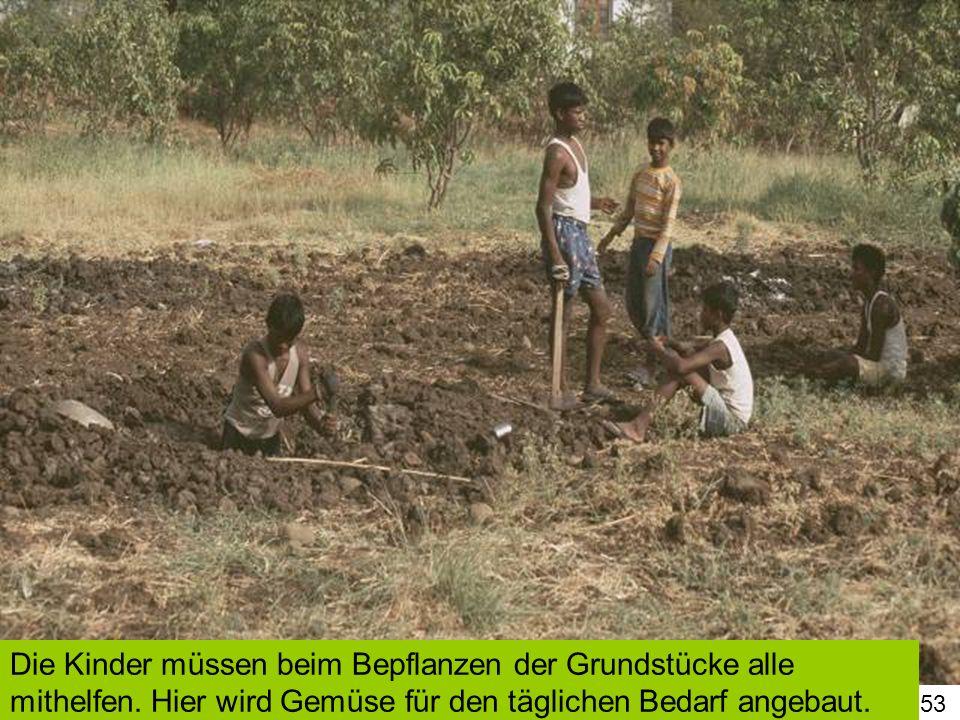 53 Die Kinder müssen beim Bepflanzen der Grundstücke alle mithelfen. Hier wird Gemüse für den täglichen Bedarf angebaut.