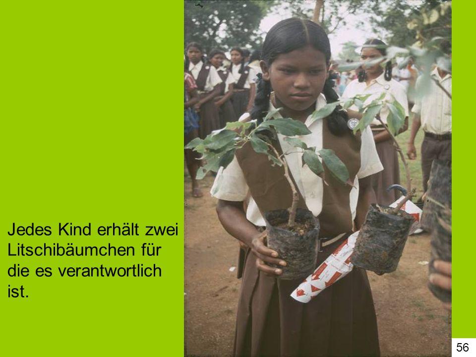 56 Jedes Kind erhält zwei Litschibäumchen für die es verantwortlich ist.
