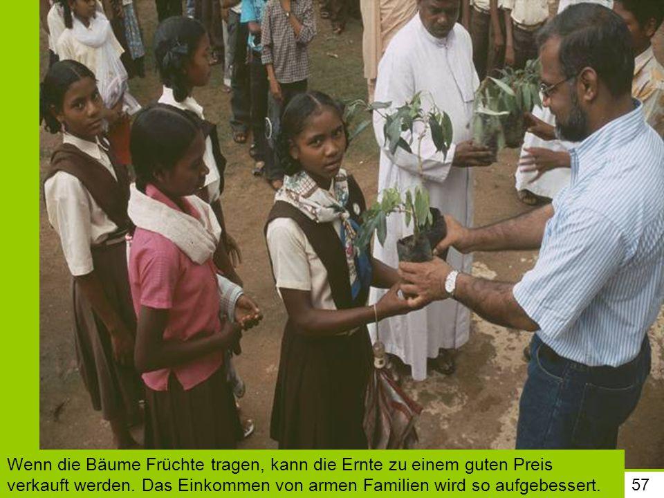 57 Wenn die Bäume Früchte tragen, kann die Ernte zu einem guten Preis verkauft werden. Das Einkommen von armen Familien wird so aufgebessert.