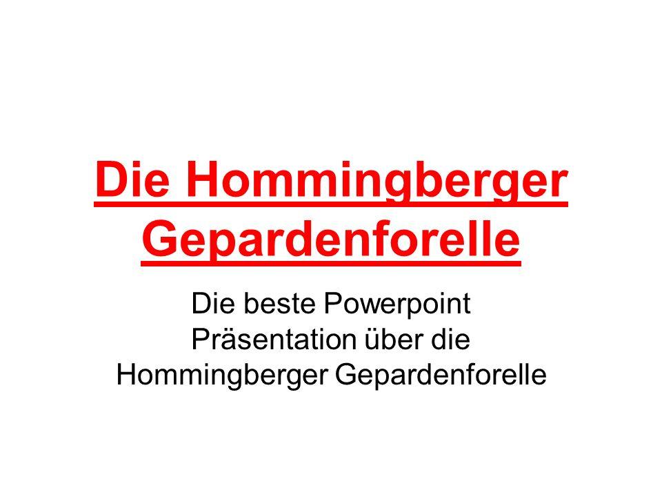 Aussehen der Hommingberger Gepardenforelle Wenn die Hommingberger Gepardenforell ausgewachsen ist sieht sie dies Hommingberger Gepardenforell ziemlich ähnlich.