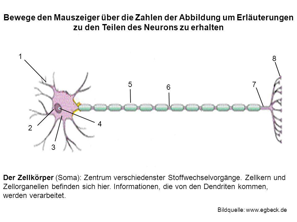 Bewege den Mauszeiger über die Zahlen der Abbildung um Erläuterungen zu den Teilen des Neurons zu erhalten 1 2 3 4 75 6 8 Bildquelle: www.egbeck.de De
