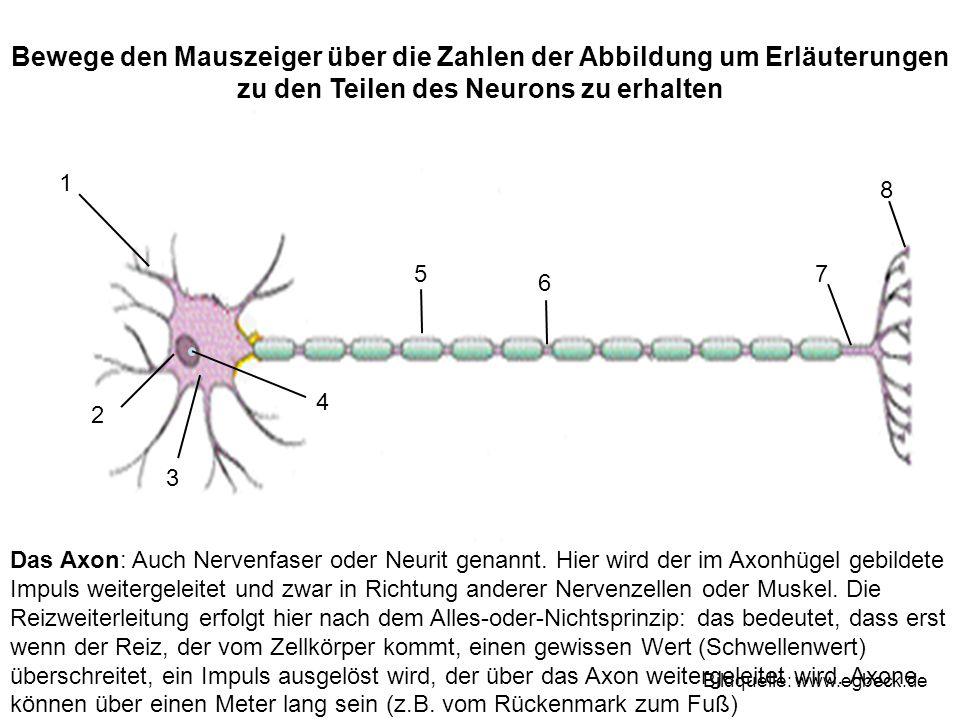 Bewege den Mauszeiger über die Zahlen der Abbildung um Erläuterungen zu den Teilen des Neurons zu erhalten 1 2 3 4 75 6 8 Bildquelle: www.egbeck.de Da