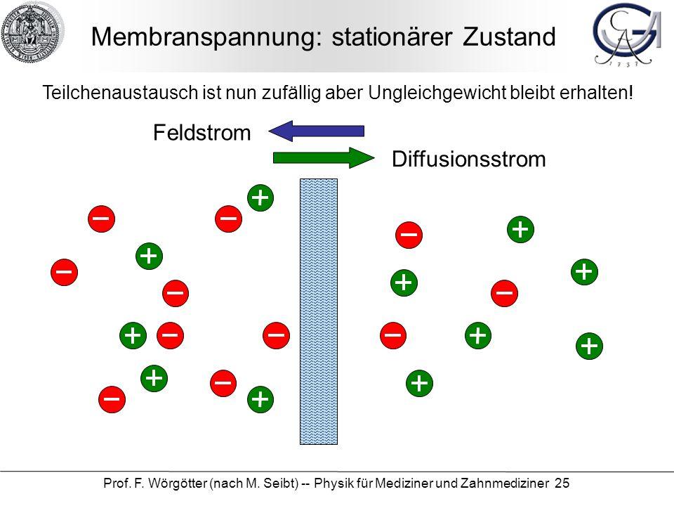 Prof. F. Wörgötter (nach M. Seibt) -- Physik für Mediziner und Zahnmediziner 25 Membranspannung: stationärer Zustand Diffusionsstrom Feldstrom Teilche