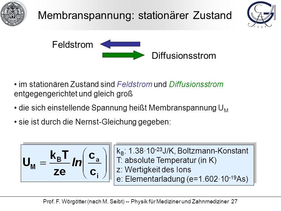Prof. F. Wörgötter (nach M. Seibt) -- Physik für Mediziner und Zahnmediziner 27 Membranspannung: stationärer Zustand Diffusionsstrom Feldstrom im stat