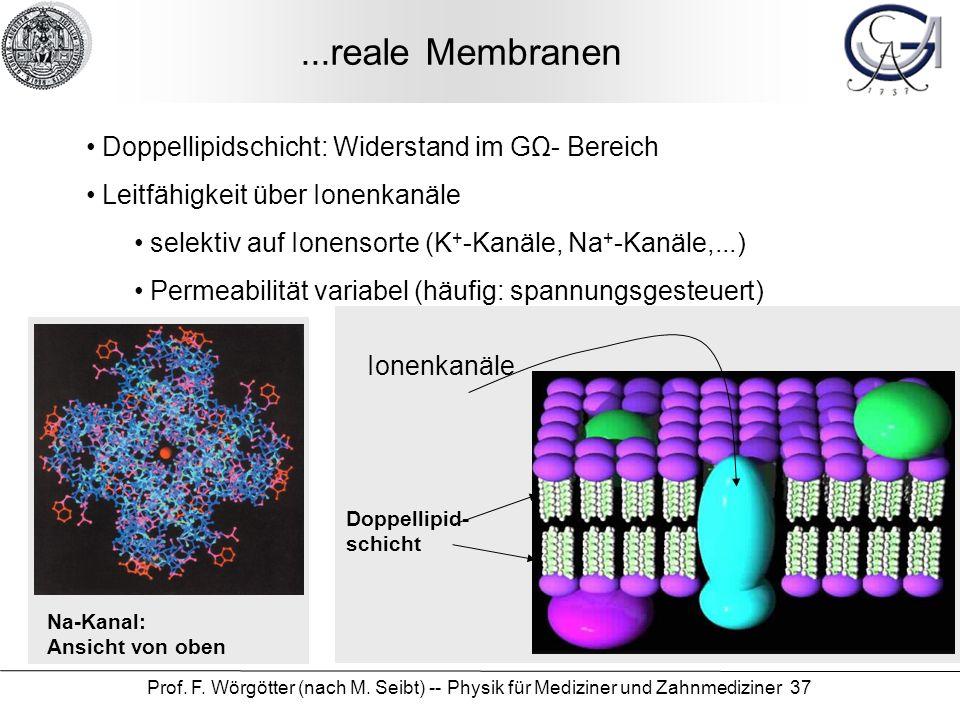 Prof. F. Wörgötter (nach M. Seibt) -- Physik für Mediziner und Zahnmediziner 37...reale Membranen Doppellipidschicht: Widerstand im GΩ- Bereich Leitfä