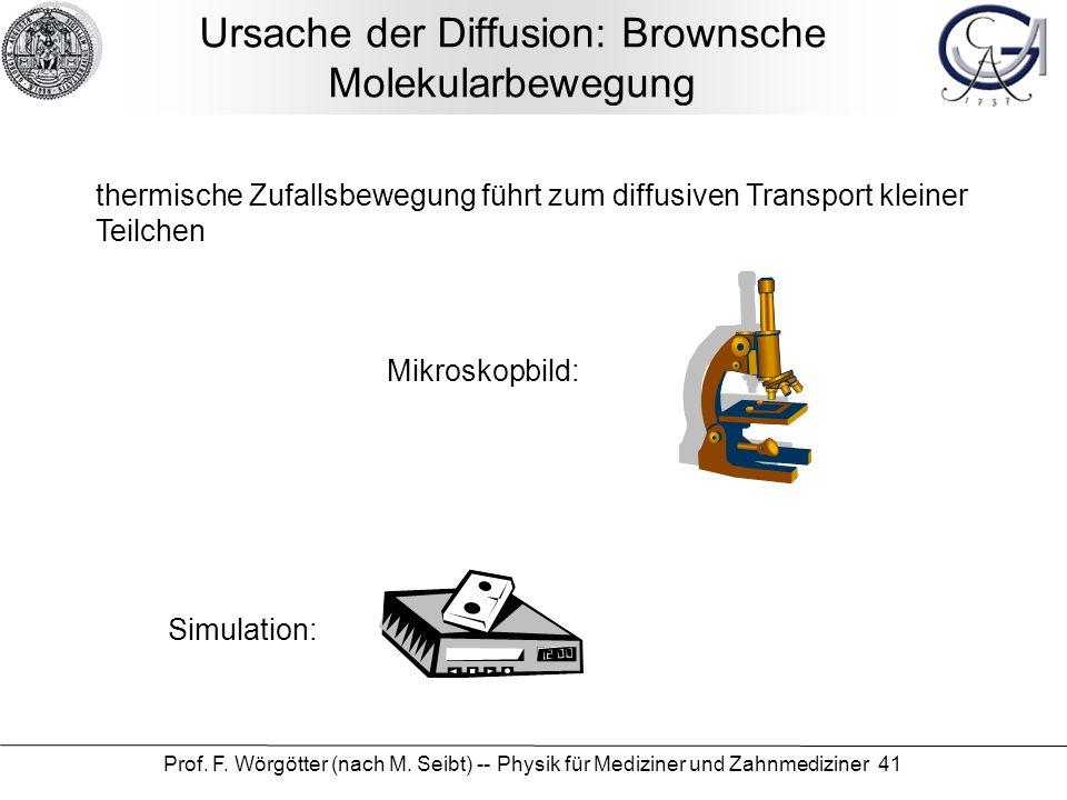 Prof. F. Wörgötter (nach M. Seibt) -- Physik für Mediziner und Zahnmediziner 41 Ursache der Diffusion: Brownsche Molekularbewegung thermische Zufallsb