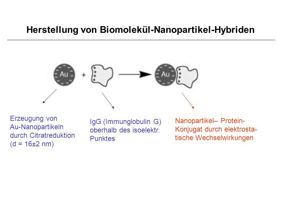 Herstellung von Biomolekül-Nanopartikel-Hybriden Erzeugung von Au-Nanopartikeln durch Citratreduktion (d = 16±2 nm) IgG (Immunglobulin G) oberhalb des