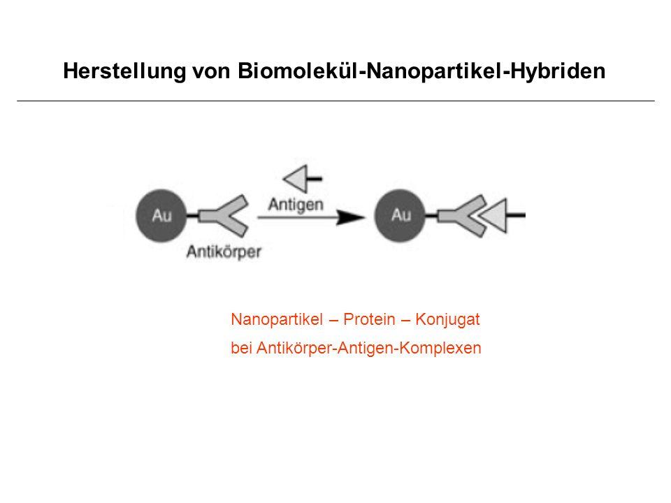 Herstellung von Biomolekül-Nanopartikel-Hybriden Nanopartikel – Protein – Konjugat bei Antikörper-Antigen-Komplexen
