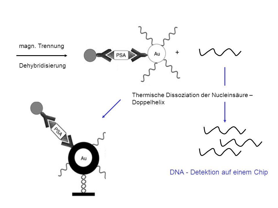 + magn. Trennung Dehybridisierung Thermische Dissoziation der Nucleinsäure – Doppelhelix DNA - Detektion auf einem Chip