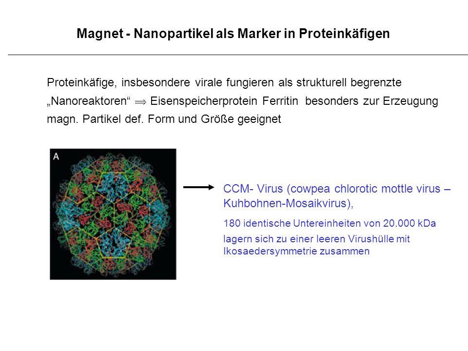 Magnet - Nanopartikel als Marker in Proteinkäfigen Proteinkäfige, insbesondere virale fungieren als strukturell begrenzte Nanoreaktoren Eisenspeicherp